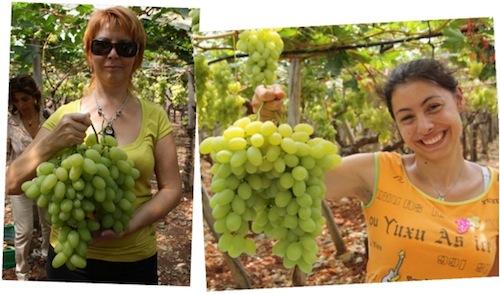 20110728-colapietra-uva-da-tavola-in-italia-09.jpg