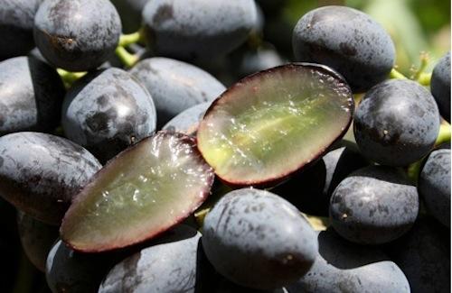20110728-colapietra-uva-da-tavola-in-italia-12.jpg