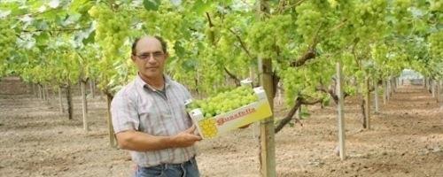 20110728-colapietra-uva-da-tavola-in-italia-19.jpg