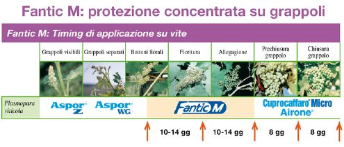 Fantic M - antiperonosporico Isagro Italia - posizionamento su vite