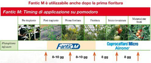 Fantic M - antiperonosporico Isagro Italia - posizionamento su pomodoro