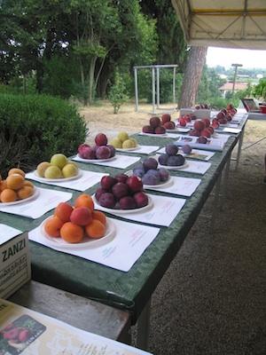 Frutti in mostra durante la manifestazione