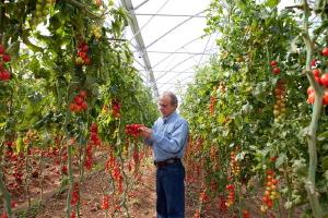 Pomodoro Bayer - Turchia