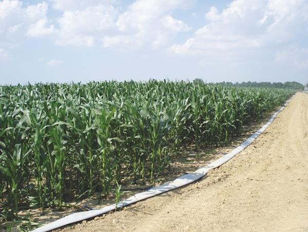 Netafim bioenergia e produzione di biomasse agronotizie for Netafim irrigazione