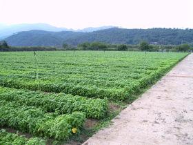 Cersaa - campi basilico