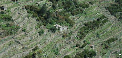 Terrazze - vigneti - 5 terre