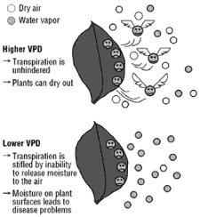 Clima in serra VPD