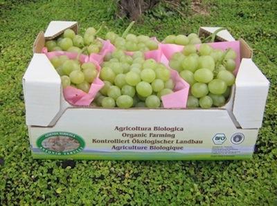 15 congresso sull 39 uva da tavola agronotizie vivaismo - Uva da tavola italia ...