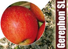 Gerephon SL per il diradamento melo