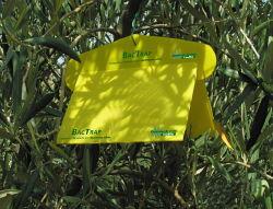 Bac-Trap - monitoraggio mosca olivo
