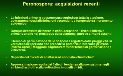 Peronospora Abruzzo