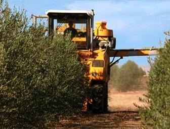Raccolta meccanizzata Olive