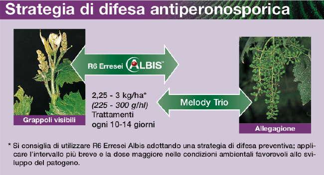 Peronospora vite - R6 Albis e Melody