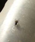 Quick Bayt Spray - e le mosche non vincono mai