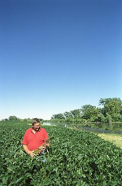 Agricoltore in campo di soia - by Syngenta