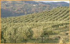 Oliveto - Catanzaro. Foto Unaprol
