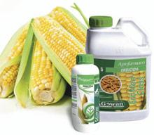 Erbifen® Class & Mitigreen®, l'accoppiata vincente per il diserbo del mais