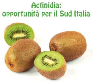 Actinidia: opportunità per il Sud Italia