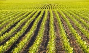 Salute delle piante: il nuovo regime europeo