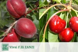 Vivai F.lli Zanzi, nuove frecce per l'arco del produttore