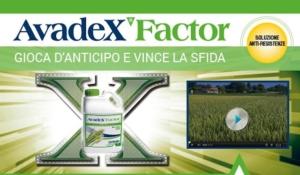Avadex Factor, il diserbo di pre-emergenza sul frumento conviene!