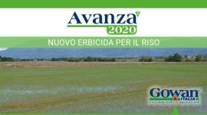 Ottimi risultati sul riso diserbato col nuovo Avanza