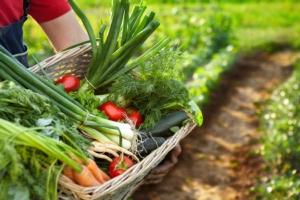Verso la trasformazione del sistema fitosanitario