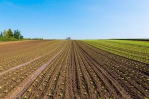 Aggiornamenti normativi sulla difesa fitosanitaria