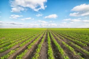 EVENTO ONLINE - Il nuovo sistema fitosanitario