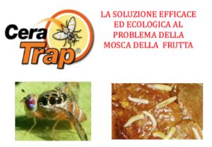 Cera Trap<sup>&reg;</sup>, la lotta naturale alla mosca della frutta - news L.E.A.