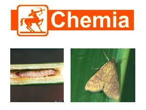 Chemia, 4 prodotti contro la piralide del mais