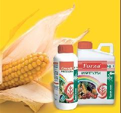 Cresit e Forza, così si controlla la piralide del mais
