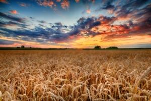 Frumento e mais, la gestione fitosanitaria nel 2020 e 2021