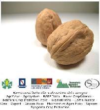 Convegno sui problemi fitosanitari dei frutti a guscio