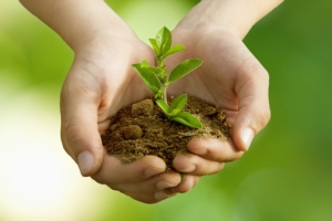 La protezione delle piante in un minuto