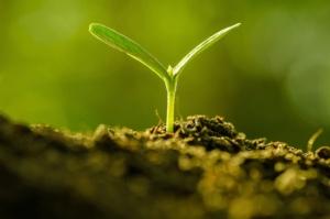 La formazione per la sostenibilità della protezione delle colture