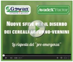 """Il """"pre-emergenza"""" per il diserbo dei cereali autunno-vernini"""