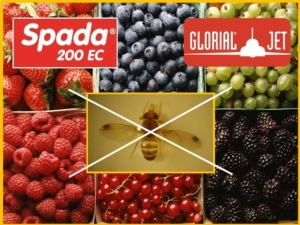 Spada e Glorial: nuove soluzioni contro il moscerino dei piccoli frutti