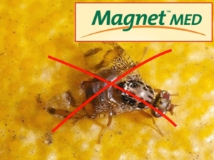 Magnet Med: stop alla Mosca mediterranea della frutta