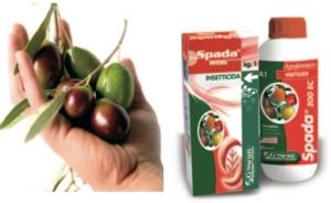 Spada di Damocle sui parassiti dell'olivo