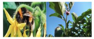 Hortofix: e il raccolto aumenta - news L.E.A.