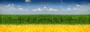 Il Bilancio Fitosanitario 2020 e 2021 di Frumento e Mais