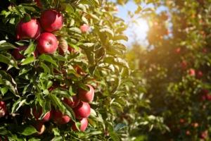 Il melo, visto da vicino: 5 video, 21 innovazioni