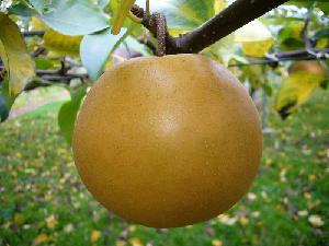 Colture minori, nuove norme europee sui prodotti fitosanitari