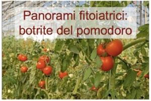 Panorami fitoiatrici: antibotritici pomodoro
