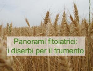 Panorami fitoiatrici: diserbanti per il frumento (Als inibitori)