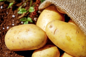 Patate ed elateridi: Oikos<sup>®</sup>, autorizzazione in deroga