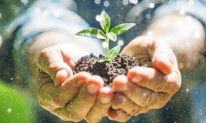 EVENTO ONLINE - Il consulente fitosanitario e la protezione delle piante