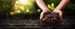 EVENTO ONLINE - Resistenza della pianta a patogeni e fitofagi