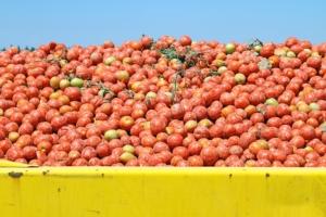 Road to Quality: la gestione del pomodoro in coltura protetta
